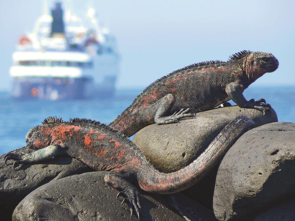 Iguanas. Galapagos Celebrity CRusie LIne