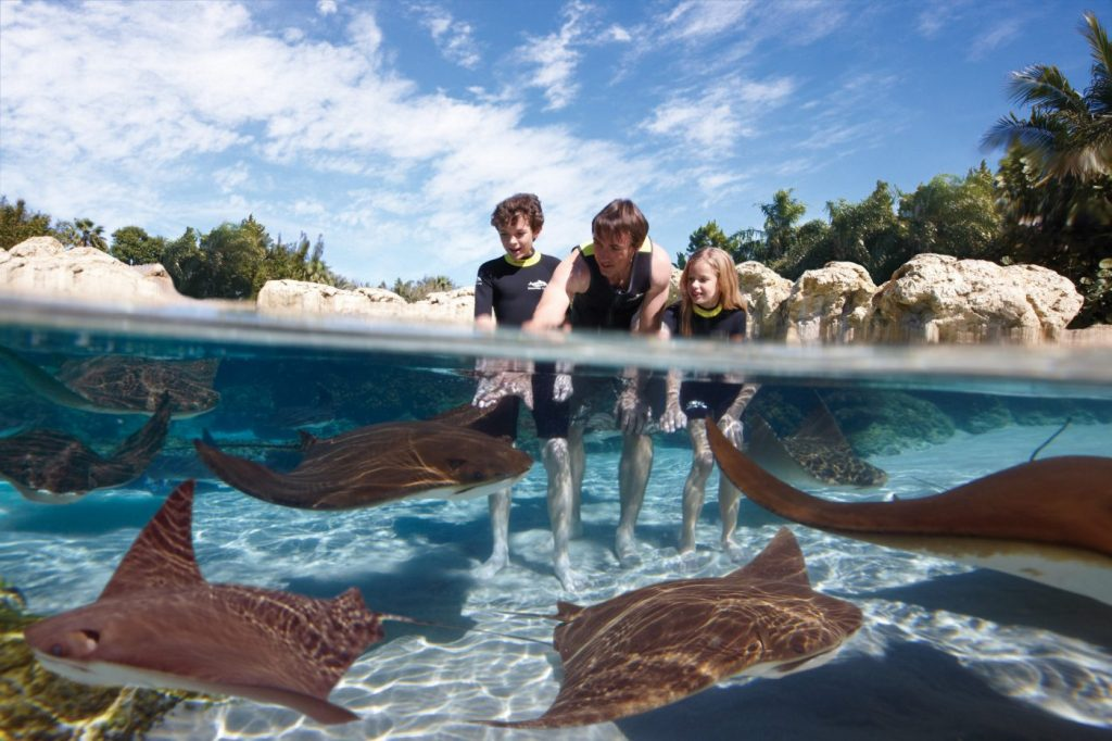 Ray_Lagoon_Discovery Cove