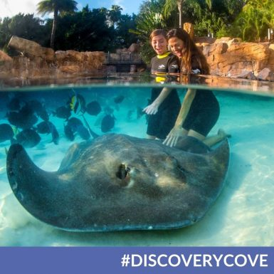 Everything You Need to Know About SeaWorld's Discovery Cove in Orlando