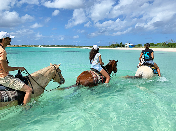 HOrseback Riding in Anguilla